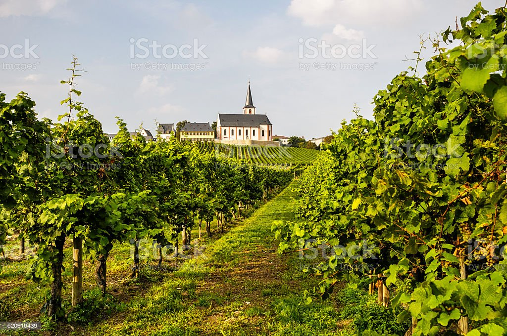 Green vineyard with church in Germany stock photo