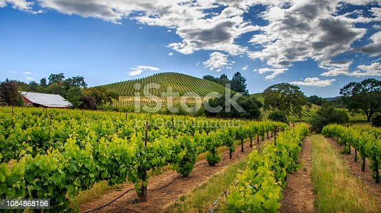 Spring time rows of vineyards continue up the hills. Fluffy white clouds and blue sky are in the background.