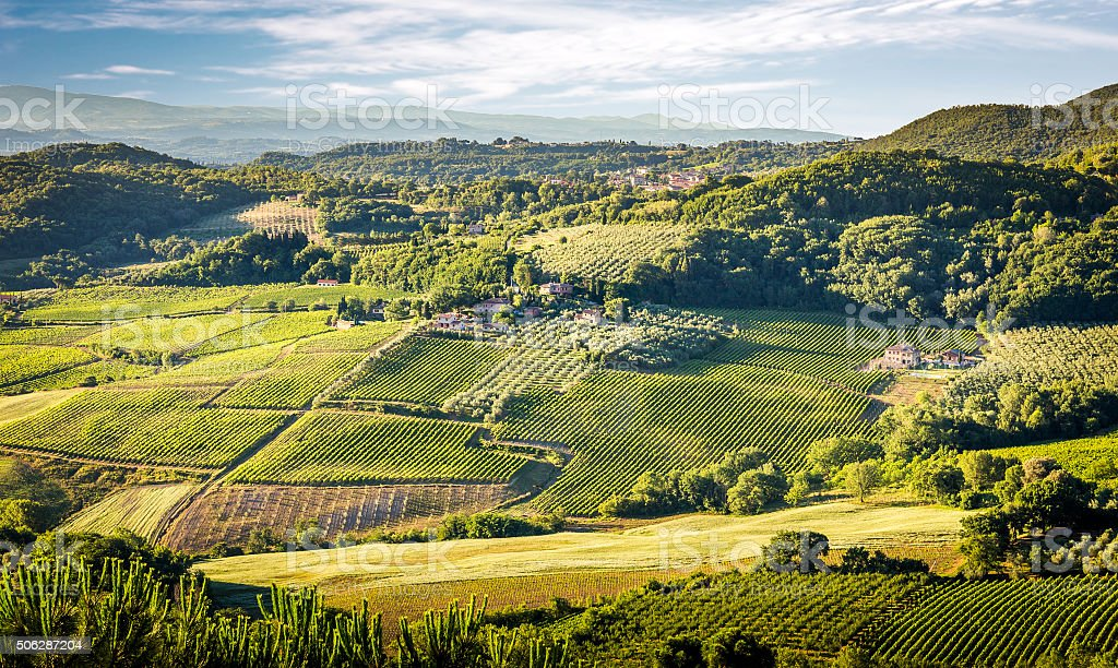 Green vineyards of Tuscany stock photo