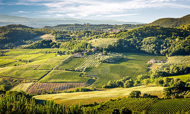 Green vineyards of Tuscany stock photo