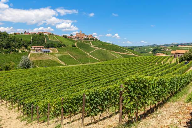 Green vineyards on the hills near Castiglione Falletto, Italy. stock photo