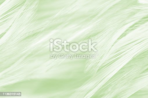 istock green vintage color trends feather texture background 1136315143