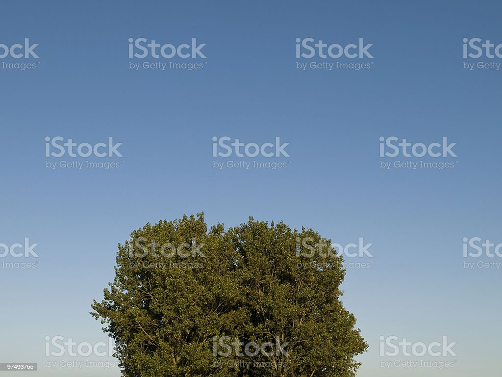 green vs blue royalty-free stock photo
