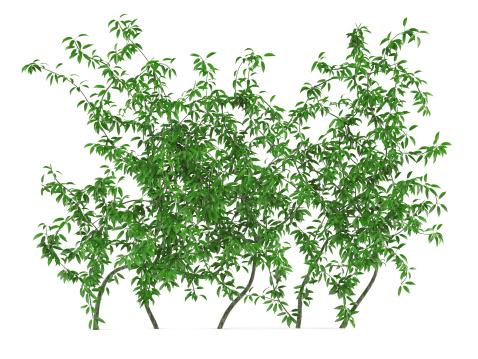 Green wall bush