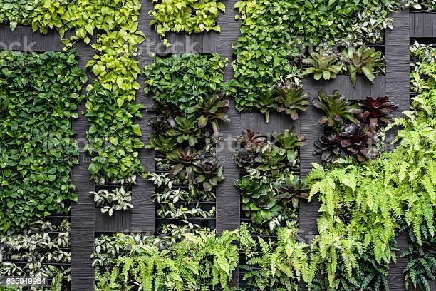 Green wall eco friendly vertical garden picture id635949984?b=1&k=6&m=635949984&s=612x612&h=vmtmuhapye4godhsynw3hidu8isnlagwlp3yinvcdqk=