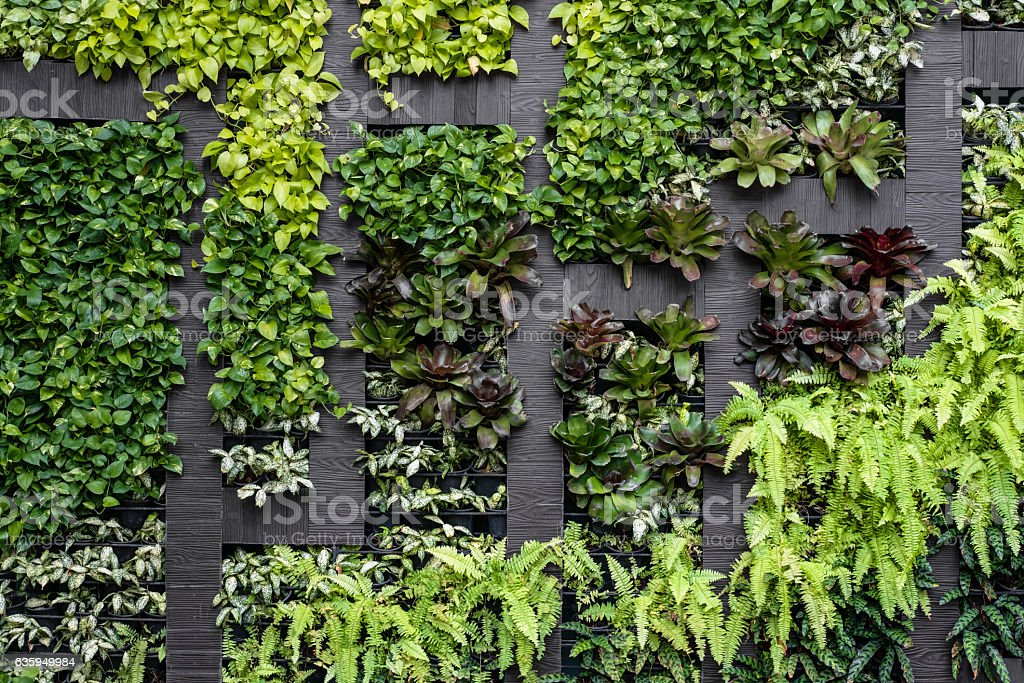 Green wall, eco friendly vertical garden stock photo