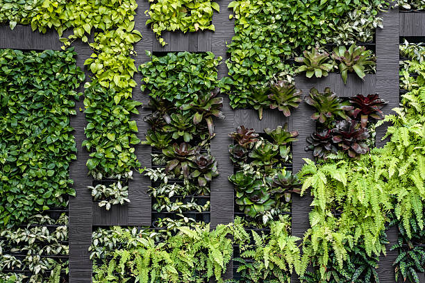 green wall, eco friendly vertical garden - environmental conservation stock photos and pictures
