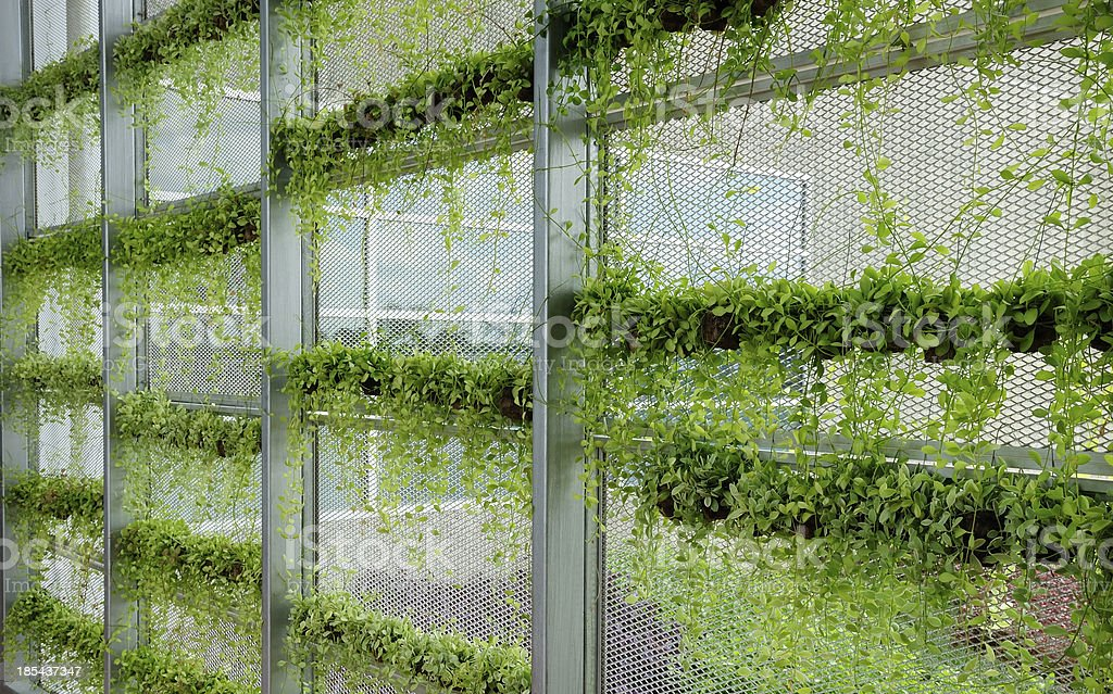 Green wall Wall with rows of green plants for green modern office building Architecture Stock Photo