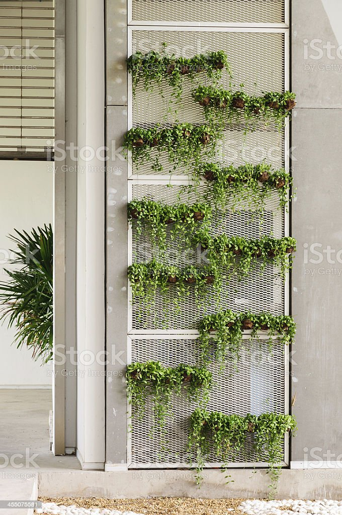 Green wall stock photo