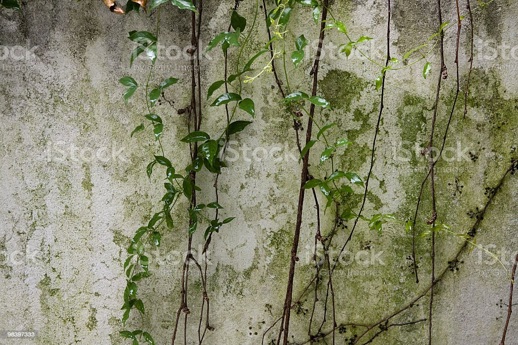 Green wall. royalty-free stock photo