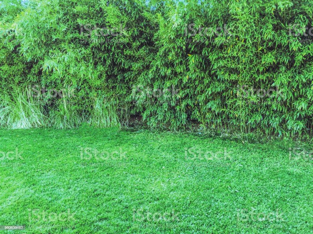 yeşil duvar, santrali arka plan ünitesi izole stok fotoğrafı