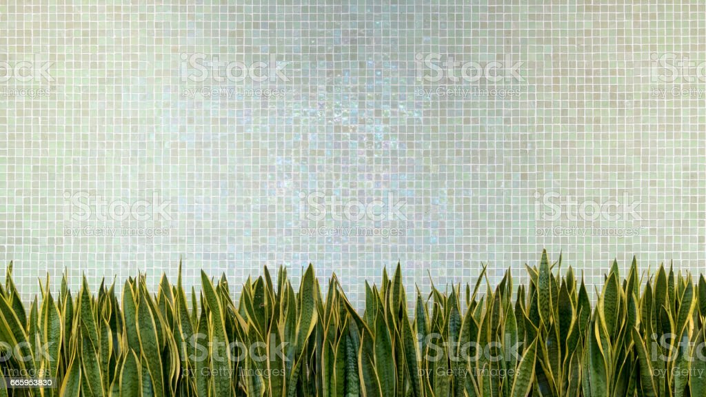 green wall tiles porcelain mosaic texture background with green leaves plant. beautiful cozy vintage style interior home decoration design. stock photo