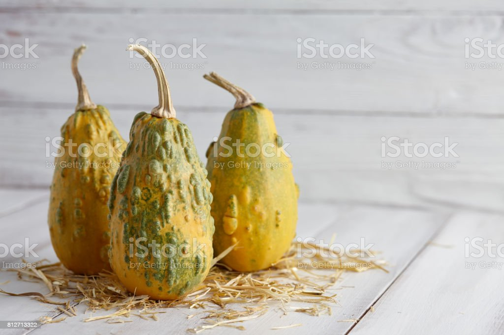 Green warty pumpkins on white planks stock photo