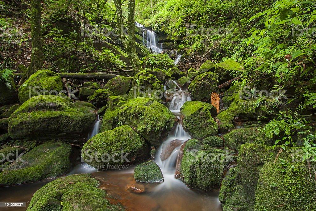 Green Water Fall stock photo