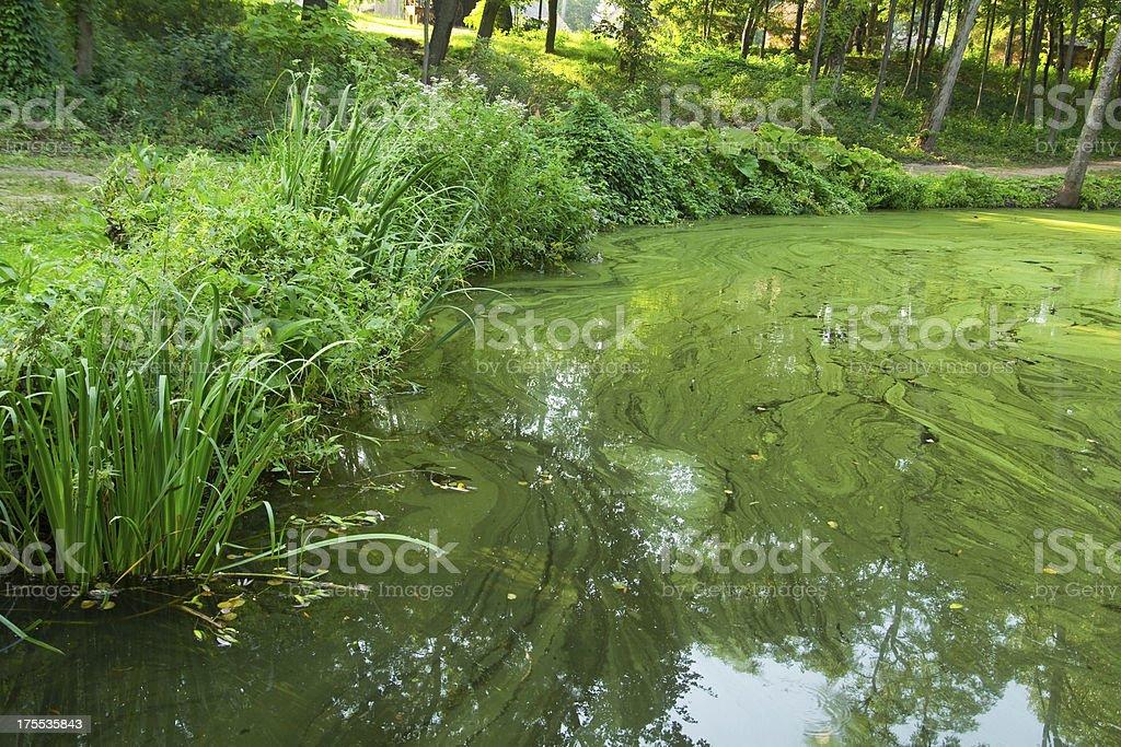 Green water foto