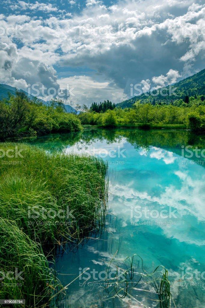Green water, Zelenci, Triglav National Park, Gorenjska, Julian Alps, Slovenia, Europe stock photo