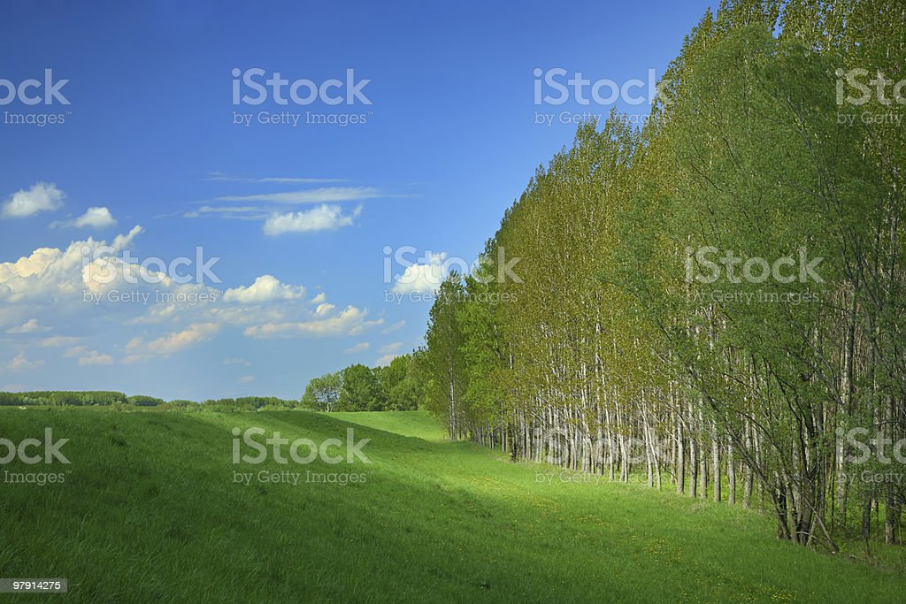 green wave royalty-free stock photo