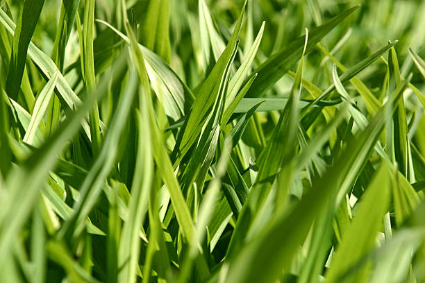 Green Weeds stock photo