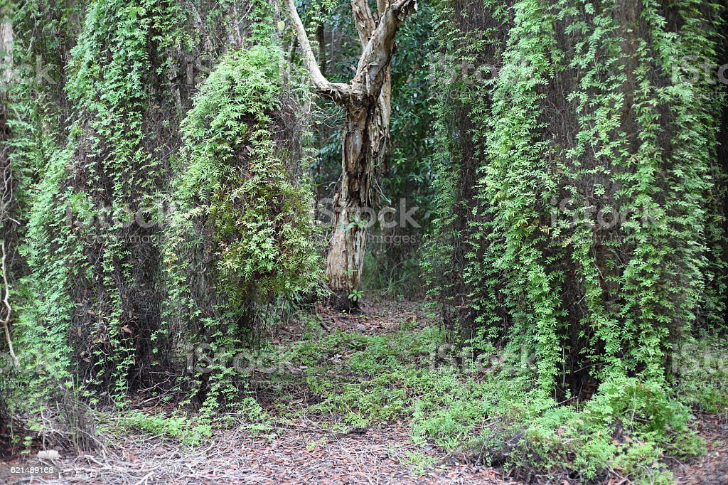 Verde foresta Terreno paludoso foto stock royalty-free