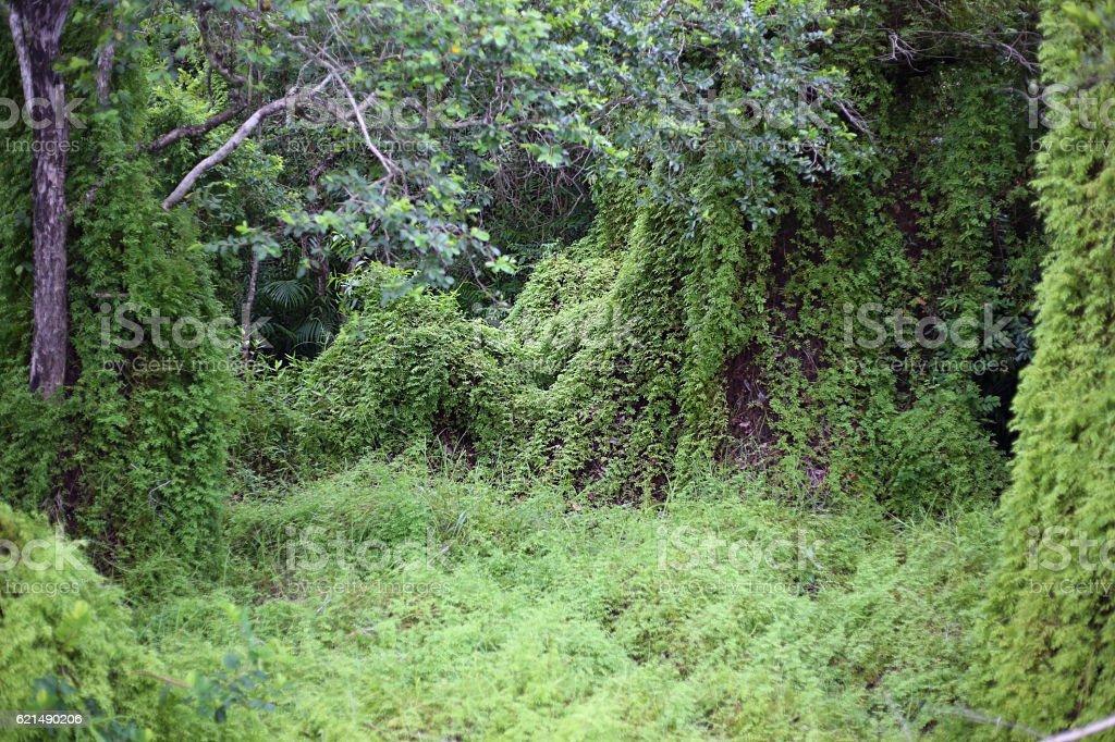 Zone humide vert forêt photo libre de droits