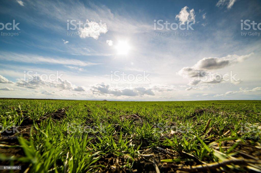 Grünes Weizenfeld, Agrarlandschaft. - Lizenzfrei Agrarbetrieb Stock-Foto