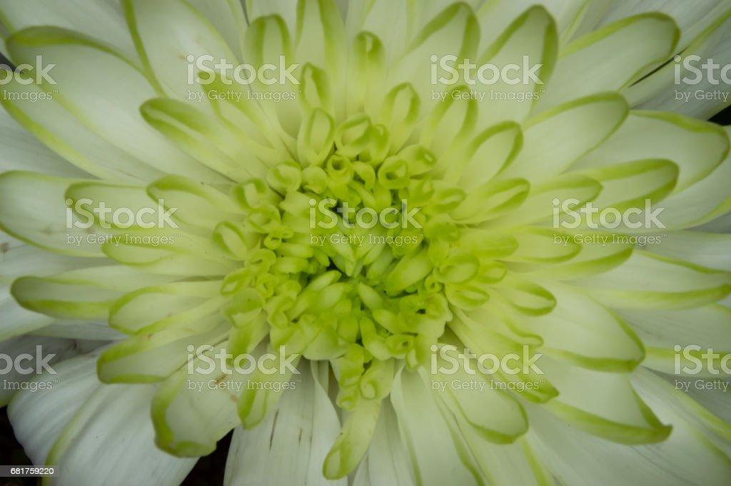 Green & White stock photo