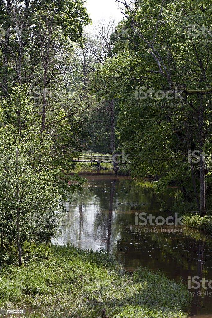Green wild lago foto de stock libre de derechos