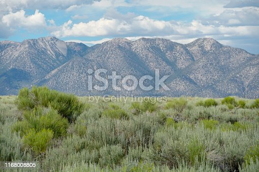 Green wild land with sagebrush plant and mountain in the background next the Lake Crowley, Eastern Sierra, Mono County, California, USA.