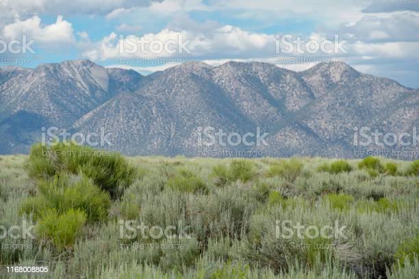 Green wild land with sagebrush plant and mountain in the background picture id1168008805?b=1&k=6&m=1168008805&s=612x612&h=bcy5gf2orubyztyfroyplddg ccwj ras3az8rxqt64=