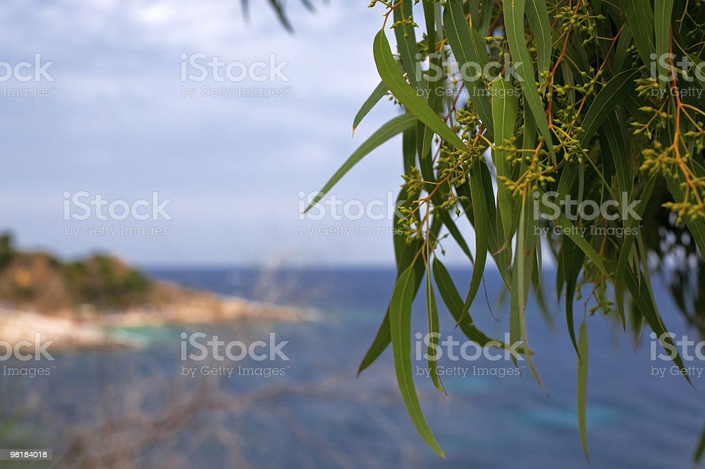 green willow leaves on a sea background royalty-free stock photo