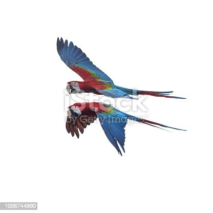 istock Green wing macaw flying isolated on white background 1056744990