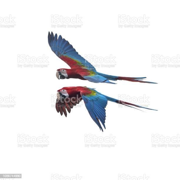 Green wing macaw flying isolated on white background picture id1056744990?b=1&k=6&m=1056744990&s=612x612&h=2wr4gqz rq0whqtpvqglvy7twiko4oqudbtb mdl ny=