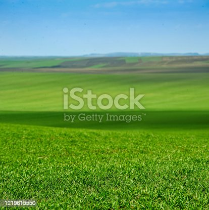 istock green winter wheat field, foreground, agrarian land 1219615550
