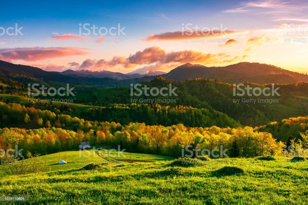 Green Wonderland At Purple Sunset Stock Photo Download Image Now Istock