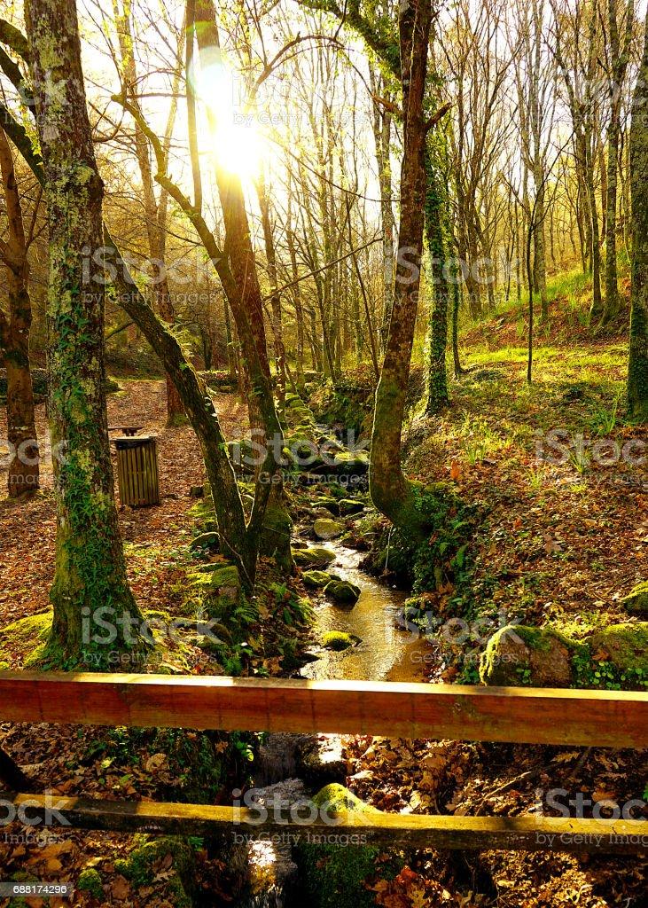 Verde floresta - foto de acervo