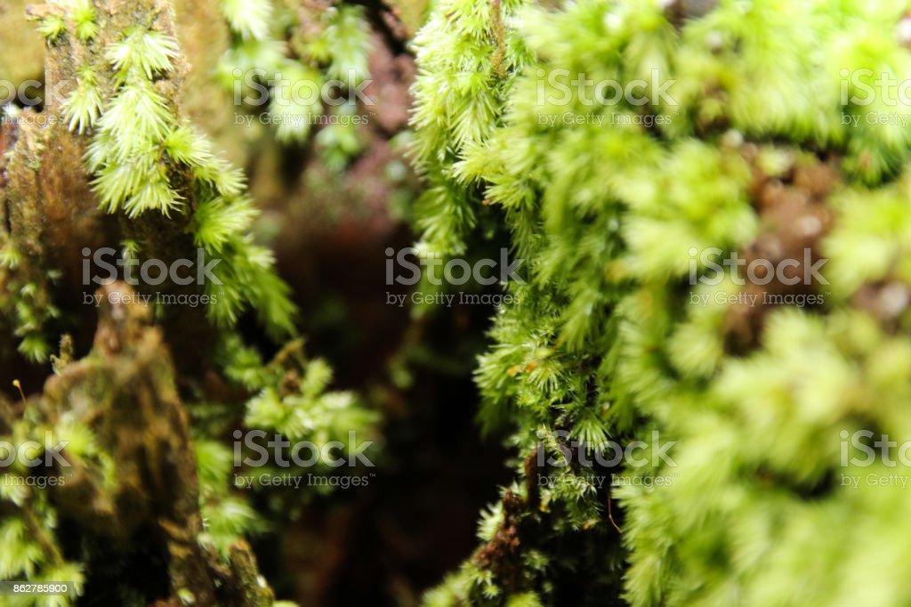 Green world new world Bryophytes