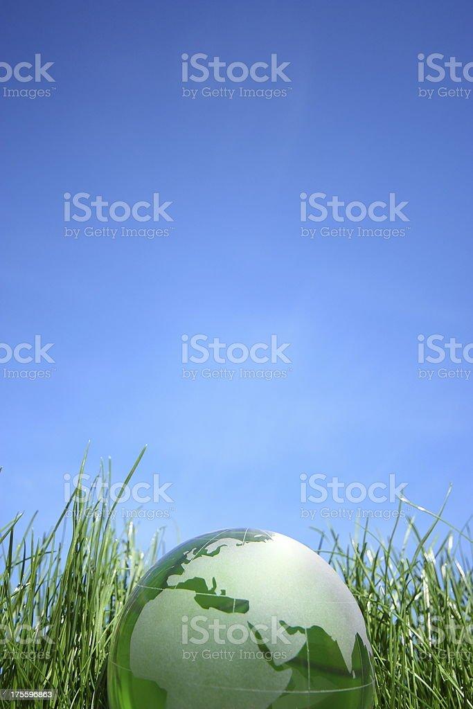 World glove on the green grass.