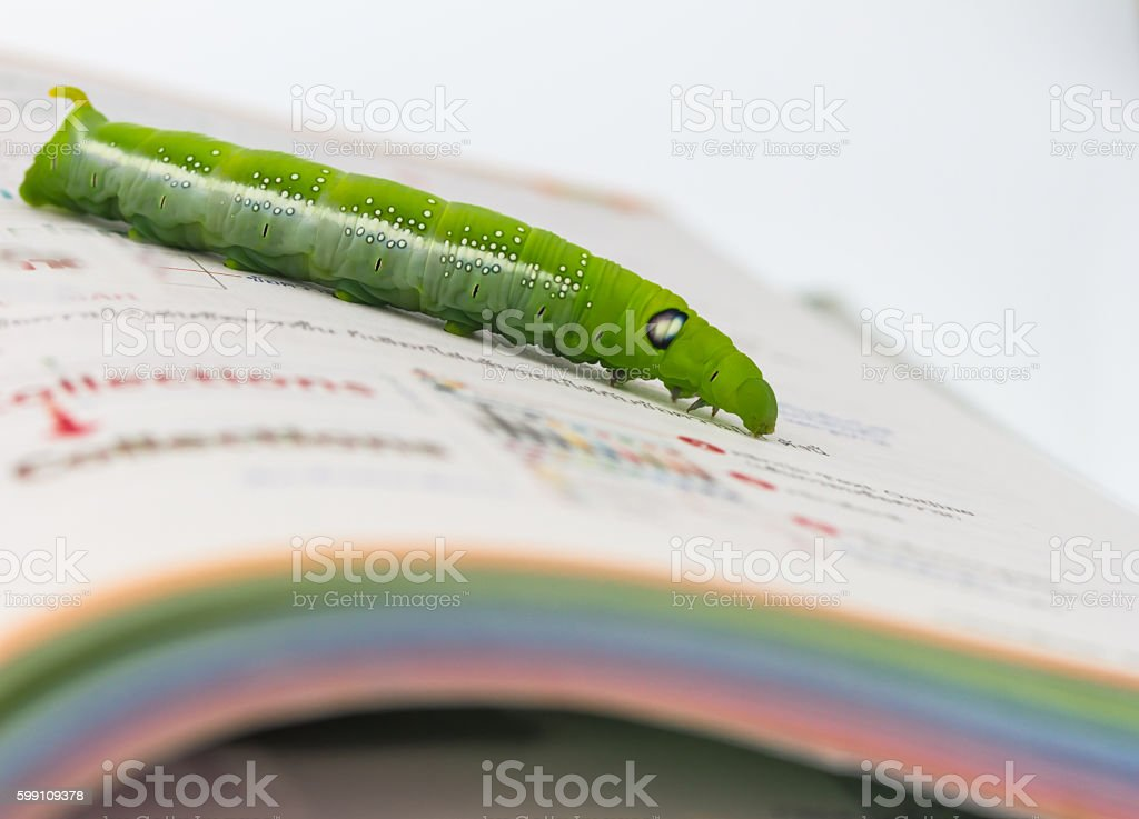 Green worm on book stock photo