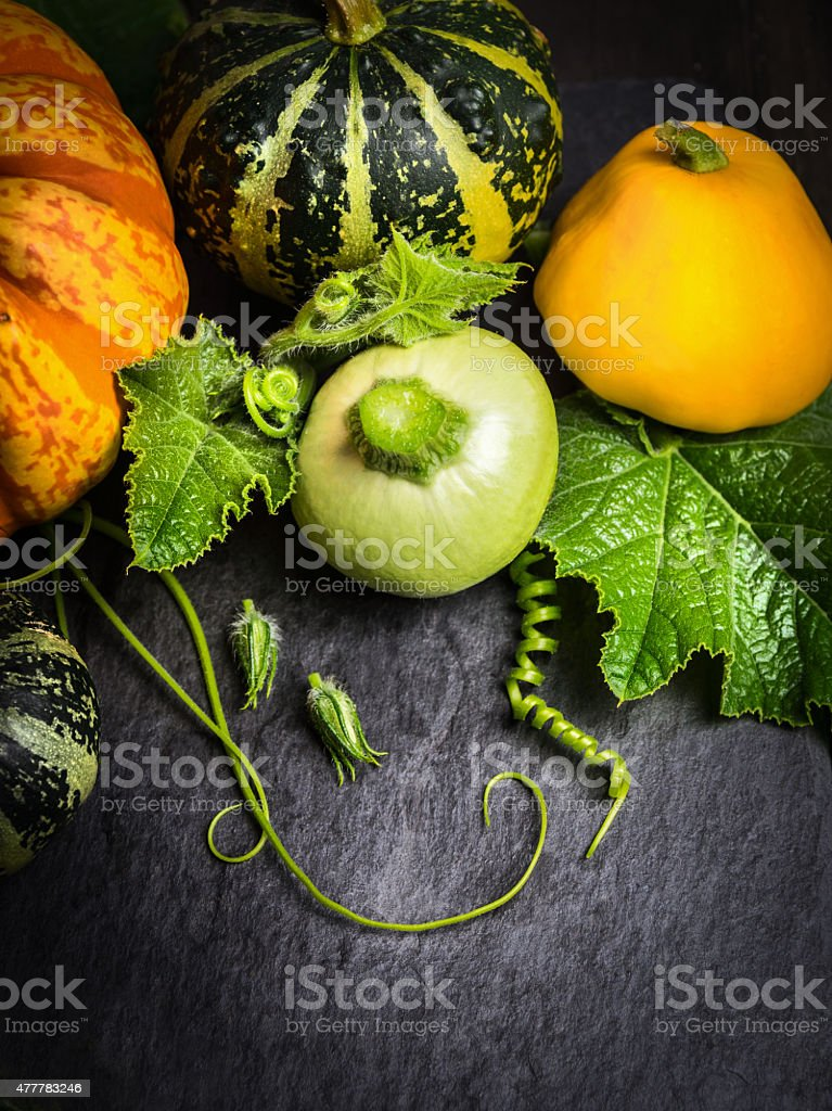 Green, yellow, orange pumpkin with buds , stems and leaves stock photo