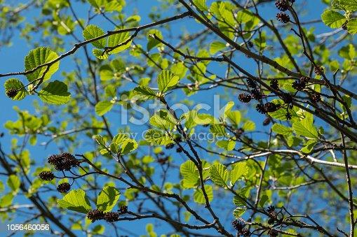 Spring in botanical garden
