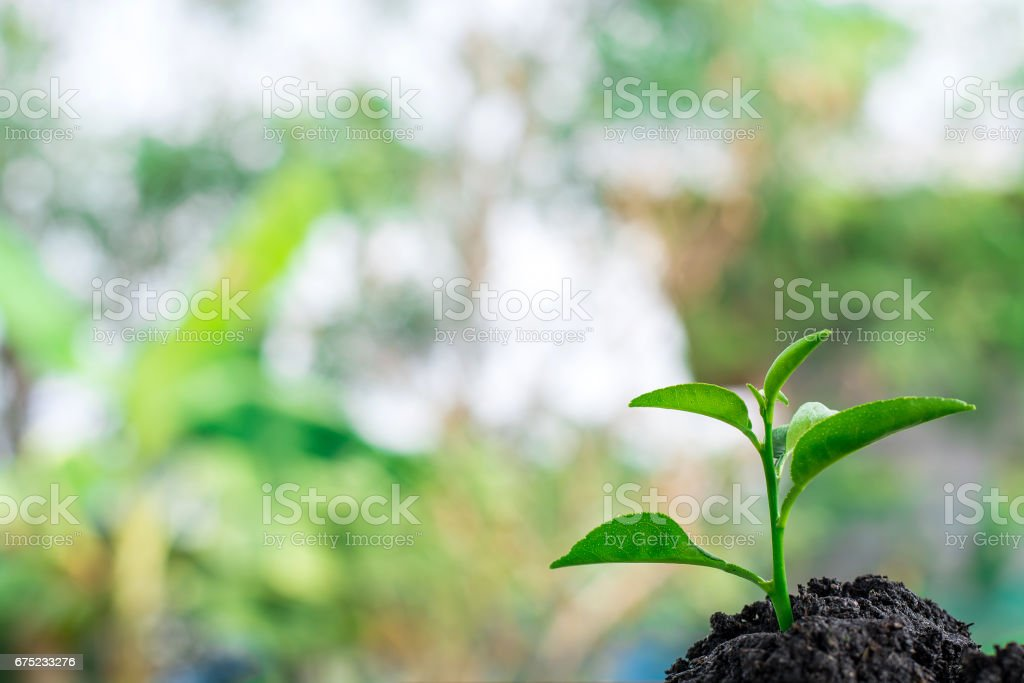 green Young plant in nature royalty-free stock photo