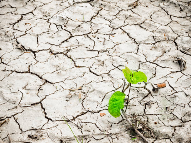 Green young plant on cracked dry land space for text and design picture id848107308?b=1&k=6&m=848107308&s=612x612&w=0&h= gcwxbbglcjavuwycpq nrj1b27mhi4ut7lkvbyapem=