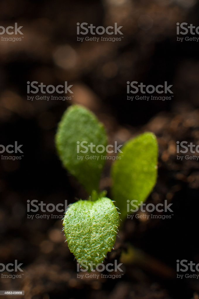 Green young sprout growing royalty-free stock photo