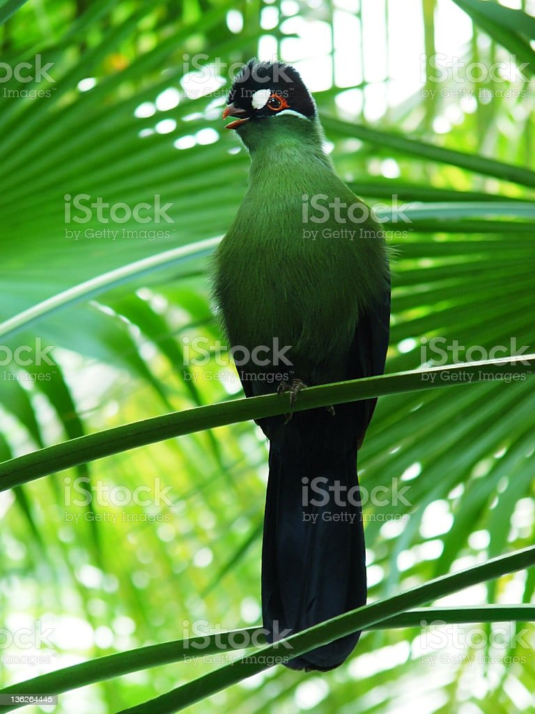 Greenbird stock photo
