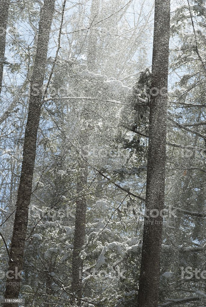 Greenbrier, Snow, Great Smoky Mtns NP royalty-free stock photo