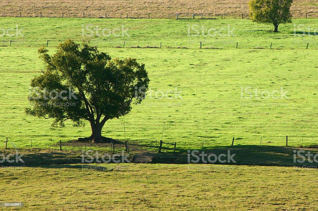 Greener fields stock photo