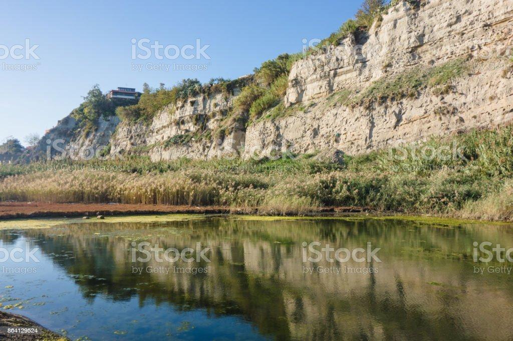 Greenery at lake royalty-free stock photo