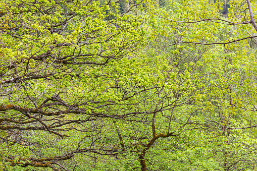 Greenery In The Forest In The Spring Stock Photo - Download Image Now