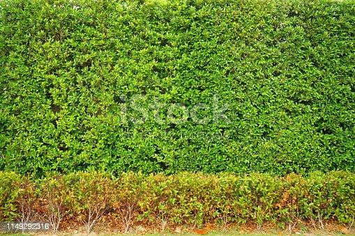 639809128 istock photo greenery leaf wall garden 1149292316