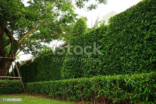 639809128 istock photo greenery leaf wall garden 1149295350